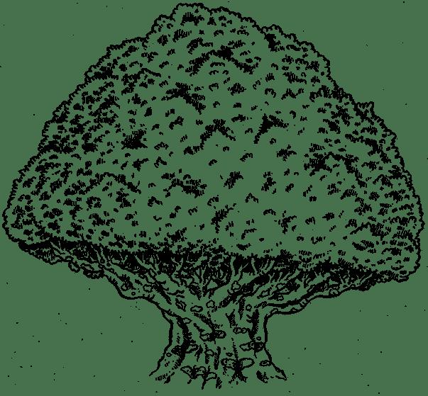 Illustration de la catégorie