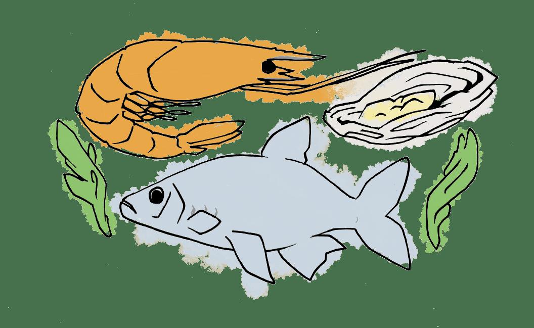Dessin poisson, fruit de mer