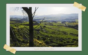 BODEGA CLANDESTINA, vin naturel catalogne