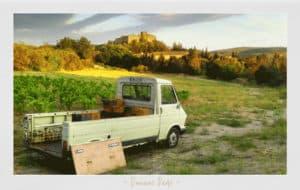 vignoble Domaine Padié, vin naturel