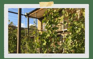 Lapati Wines - Géorgie - vin naturel
