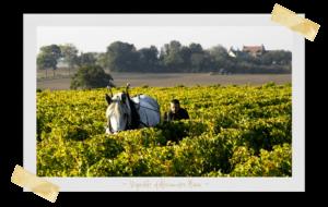 Vignoble alexandre bain, vin naturel Loire