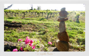 Vignoble Badea, vin naturel